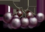 Grappe de vigne pourpre.
