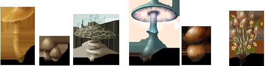 champignons.png